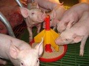 Корма  для свиней производства фирмы Sano.