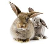 Куплю кроликов живым весом  25грн/кг