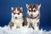 Ветеринарная квалифицированная помощь животным на дому.