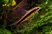 Мирные рыбки,  корм и аквариумы