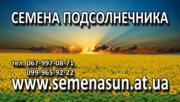 Семена подсолнечника, кукурузы, рапса  Украина Импорт от 100$