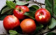Продам яблука Гала Галаксі,  Хані Крісп,  Айдаред,  Джонаголді.
