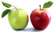 Купить яблоки оптом на закладку