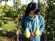 Продам грушу Ноябрьську. Врожай 2018 року. Вирощено з любов'ю )))